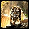Тигры Живые Обои Версия: 7.2