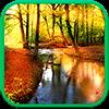 Осенний Лес Живые Обои Версия: 1.0.6