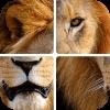 Угадай животных по фрагментам Версия: 1.5.3