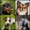 Породы собак Версия: 1.98