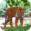 Hungry Tiger 3D Версия: 1.321