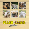 Flash Cards Версия: 005